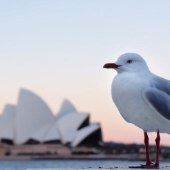 It's not the typical Opera House photo! It was really hard to take a good shot with all the tourists around.